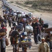 refugee_450